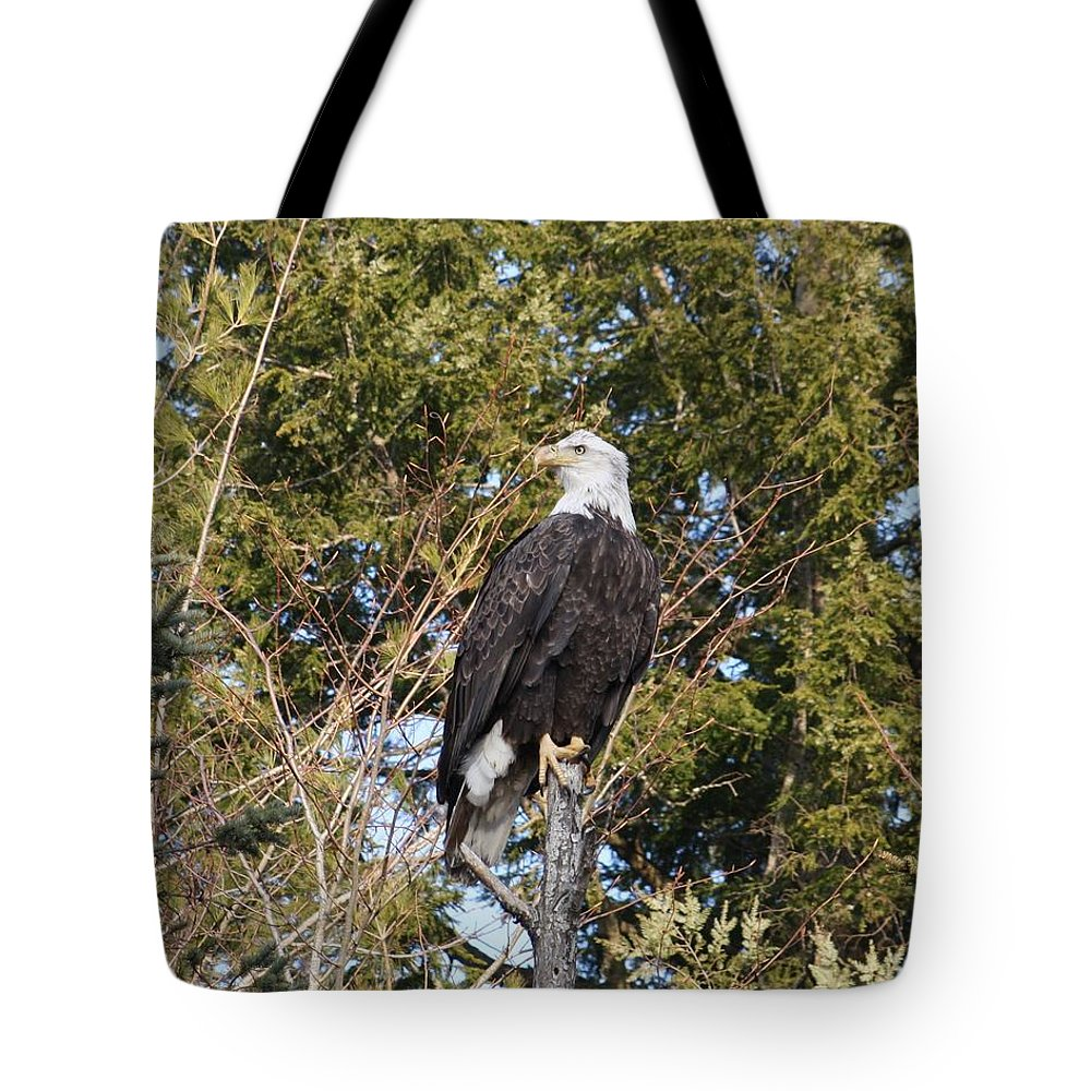 Eagle Tote Bag featuring the photograph Eagle 1986 by Joseph Marquis