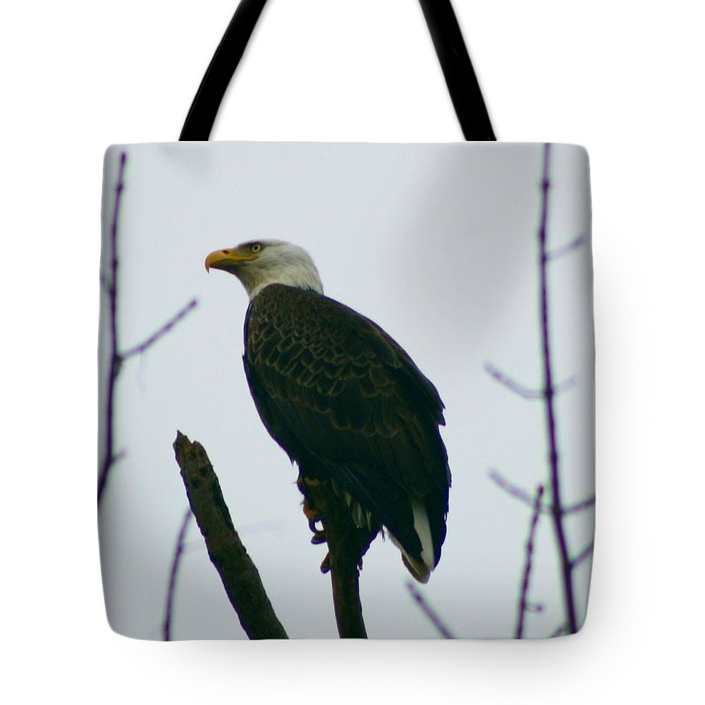 Eagle Tote Bag featuring the photograph Eagle 3940 by Joseph Marquis