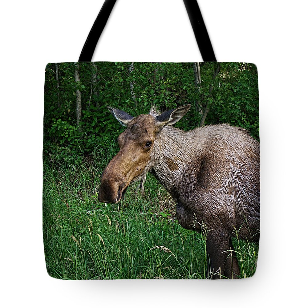 Moose Tote Bag featuring the photograph Eagle Eye Moose by Nick Gray