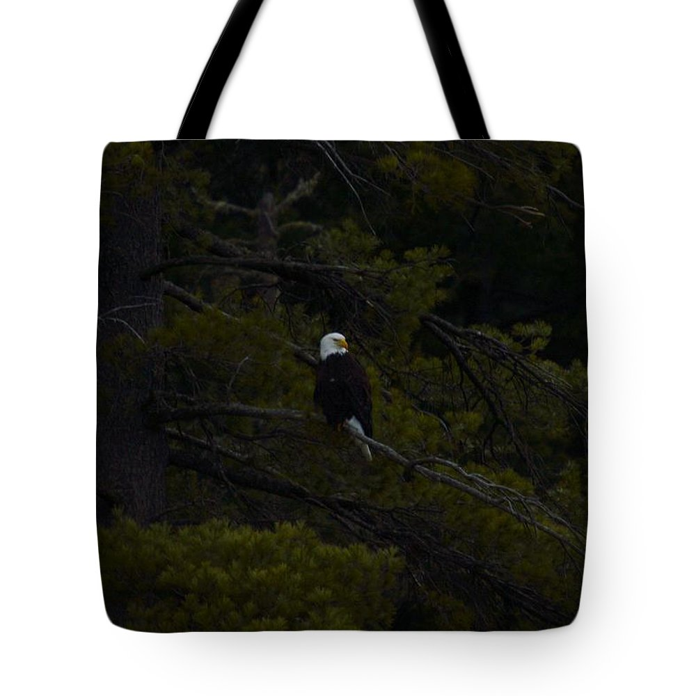 Bald Eagle Tote Bag featuring the photograph Eagle Splendor by Thomas Phillips
