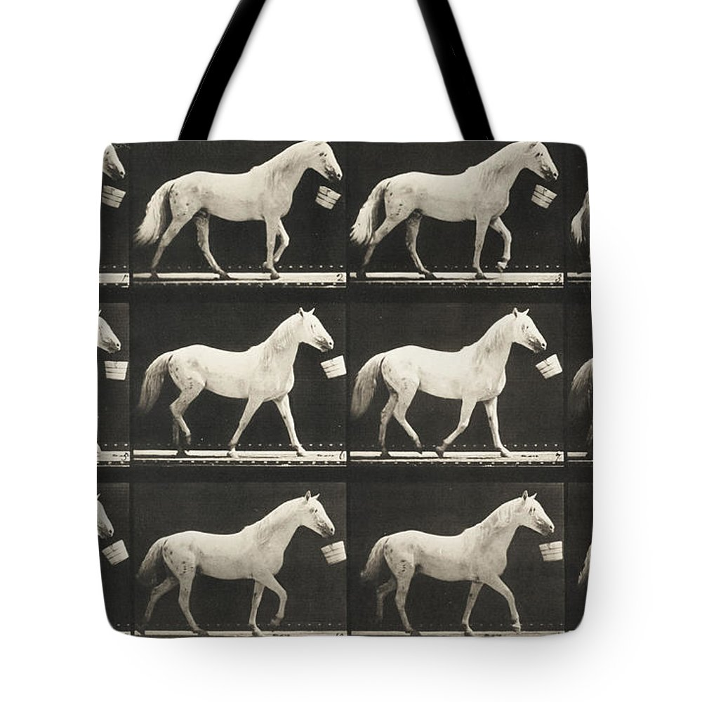 Jumping Tote Bag featuring the painting Eagle Walking With A Bucket In Mouth by Celestial Images