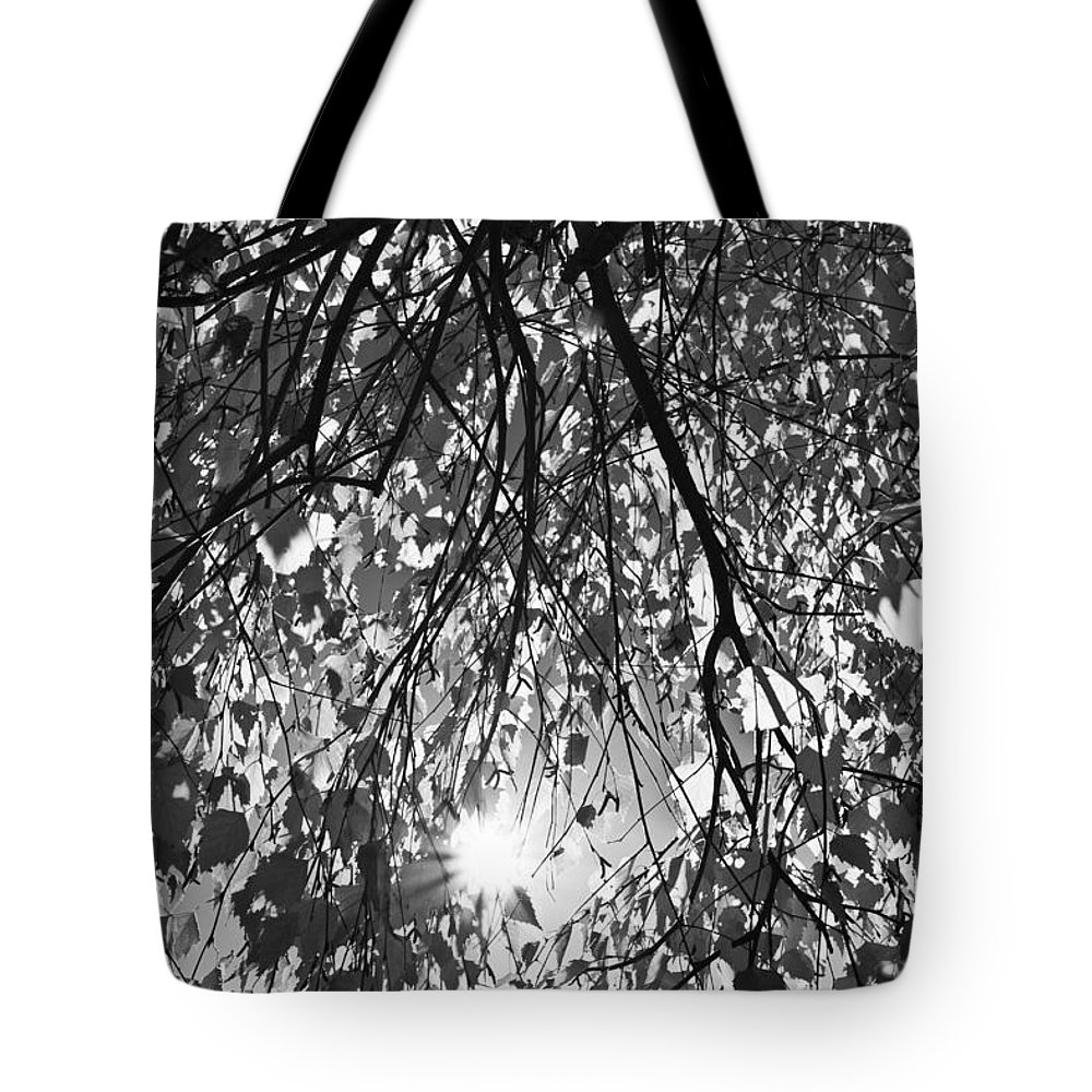 Autumn Tote Bag featuring the photograph Early Autumn Monochrome by David Pyatt