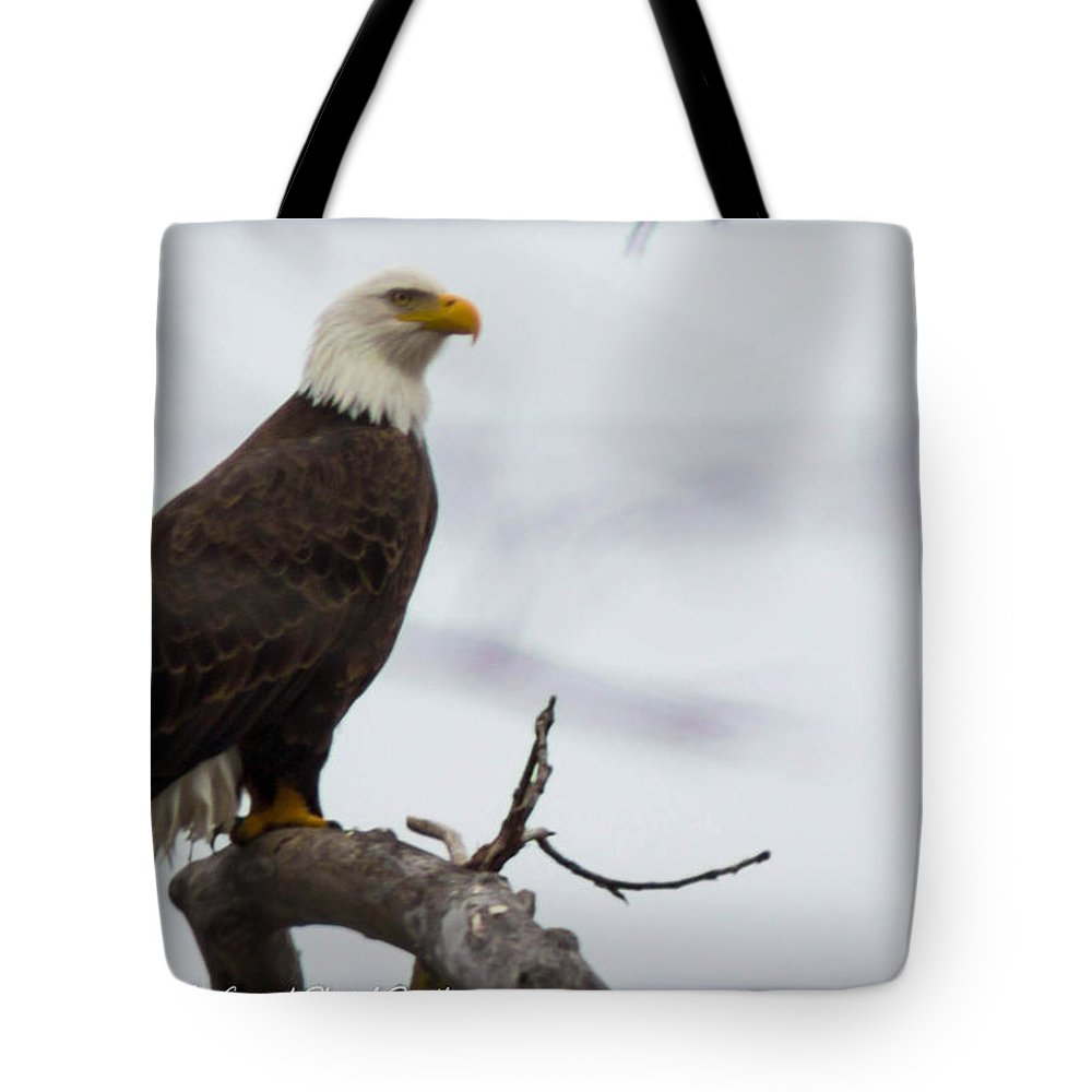 Bald Eagle Tote Bag featuring the photograph Early Evening Hunting by Sheryl Mayhew