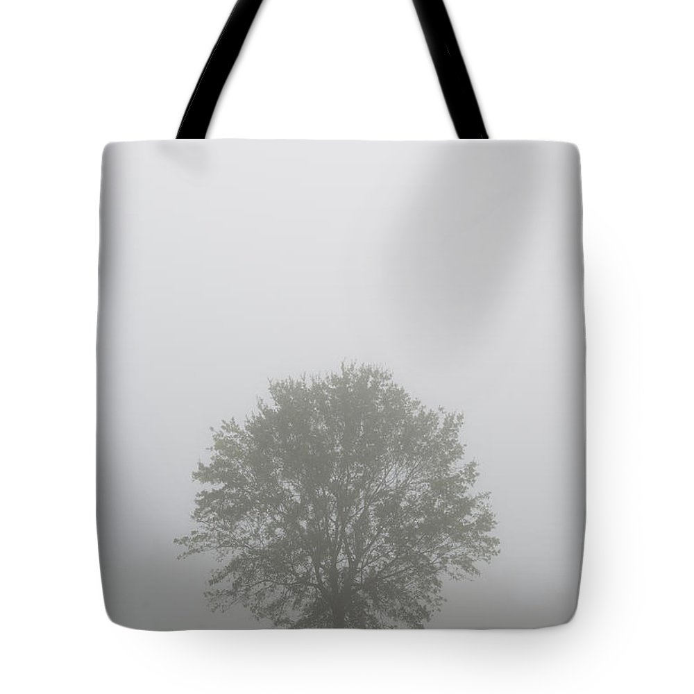 Color Tote Bag featuring the photograph Early Morning Tree In Mist I Usa by Sally Rockefeller
