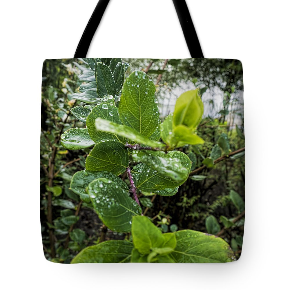 Tote Bag featuring the photograph Early Rain by Cathy Anderson