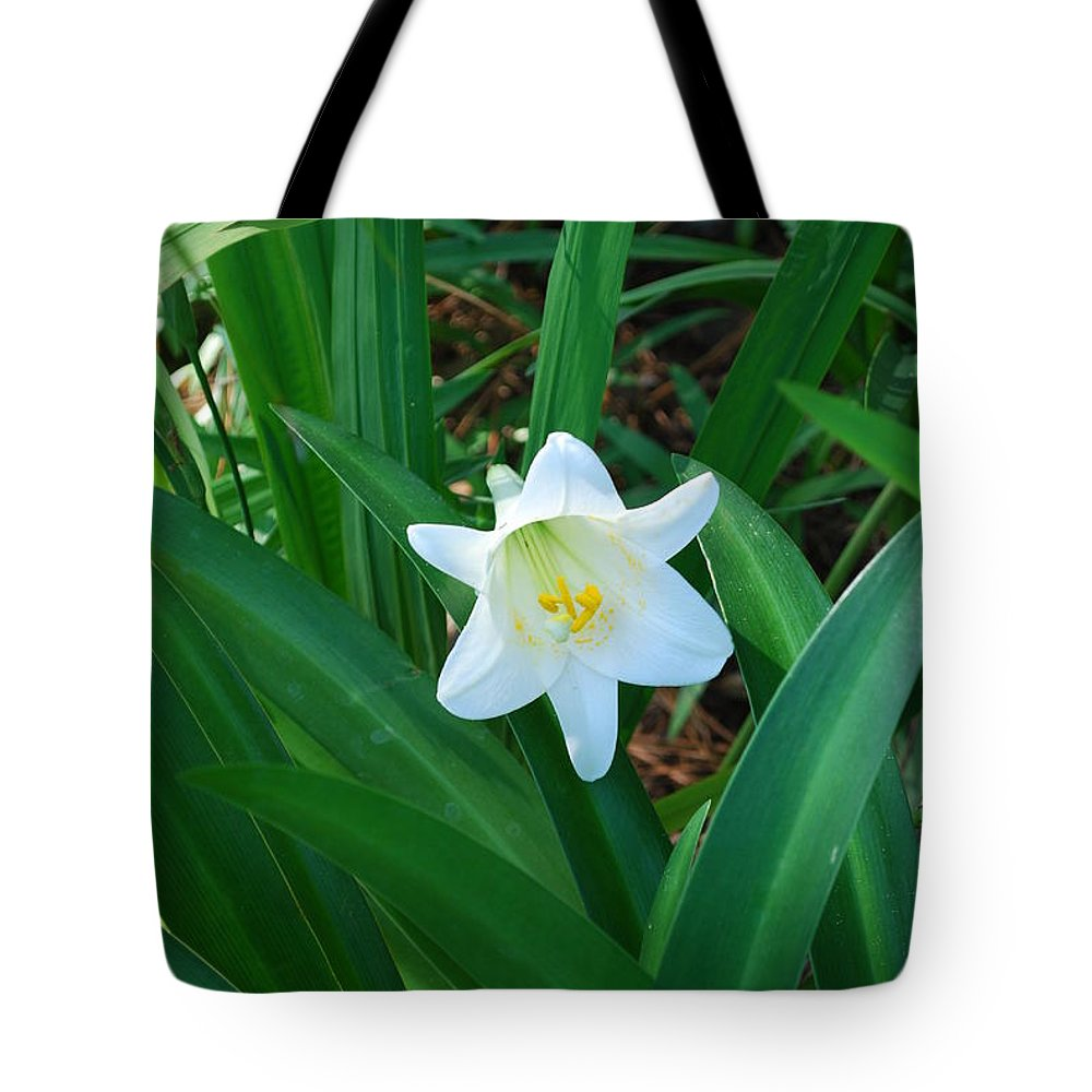 Growing In My Yard Tote Bag featuring the photograph Easter Lily by Robert Floyd