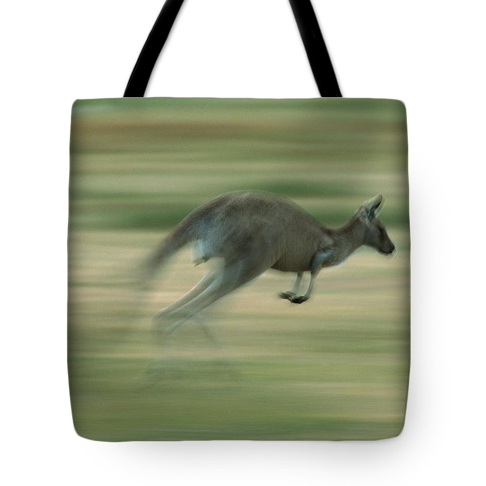 Australia Tote Bag featuring the photograph Eastern Grey Kangaroo Female Hopping by Ingo Arndt