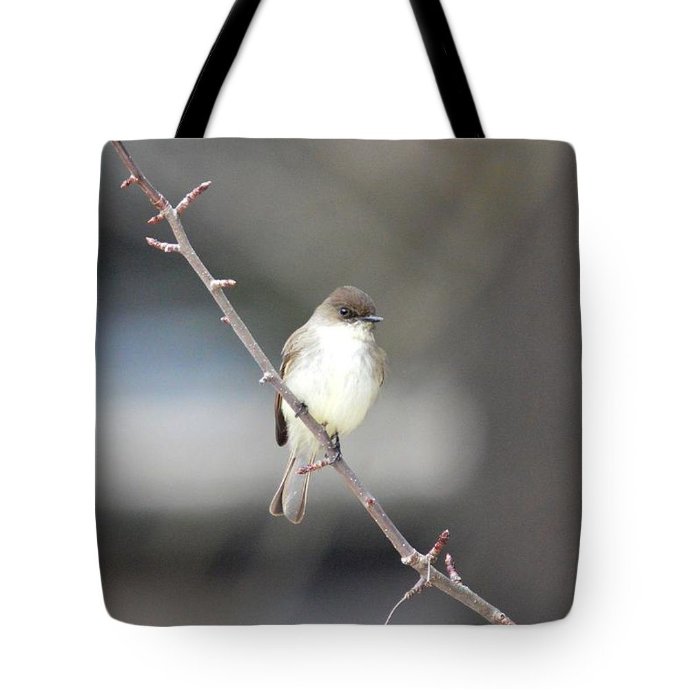 Eastern Phoebe Tote Bag featuring the photograph Eastern Phoebe by Thomas Phillips