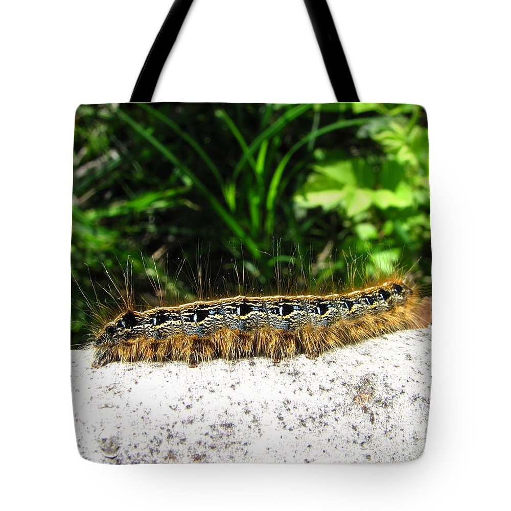 Eastern Tent Caterpillar Prints Colorful Caterpillar Prints Common Caterpillar Images Entomology Biodiversity Nature Tote Bag featuring the photograph Eastern Tent Caterpillar by Joshua Bales