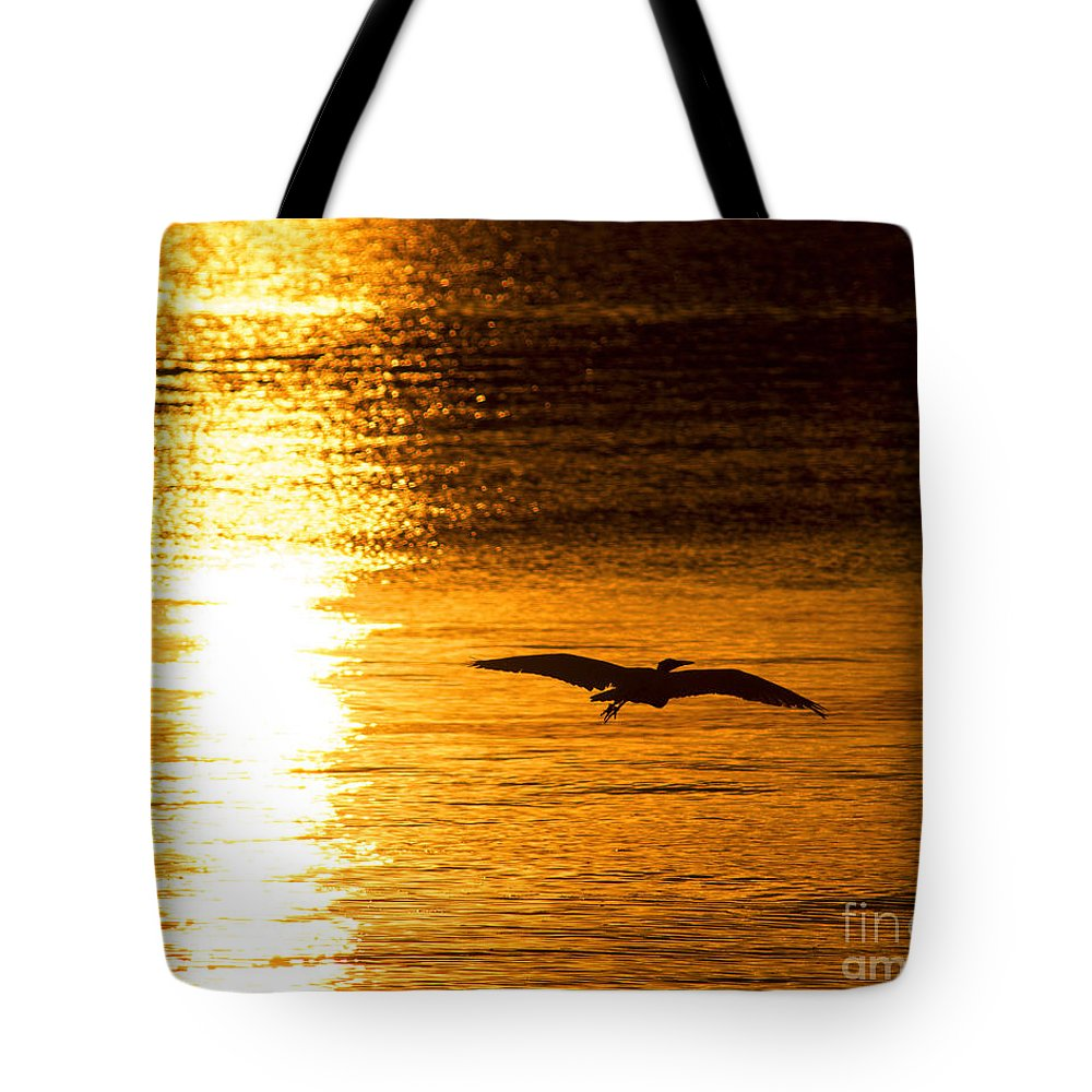 Bird Tote Bag featuring the photograph Easy Glider by Joe Geraci