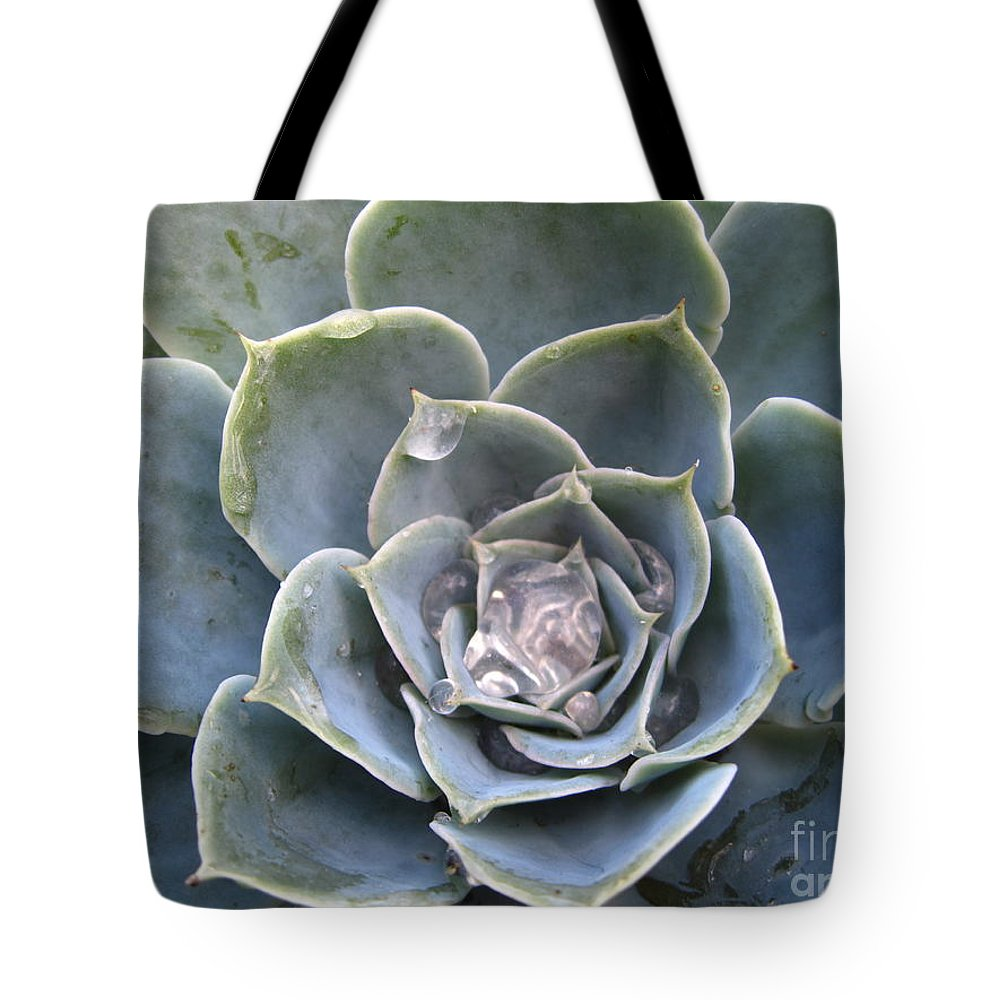 Abstract Tote Bag featuring the photograph Echeveria With Water Drops by Amanda Mohler