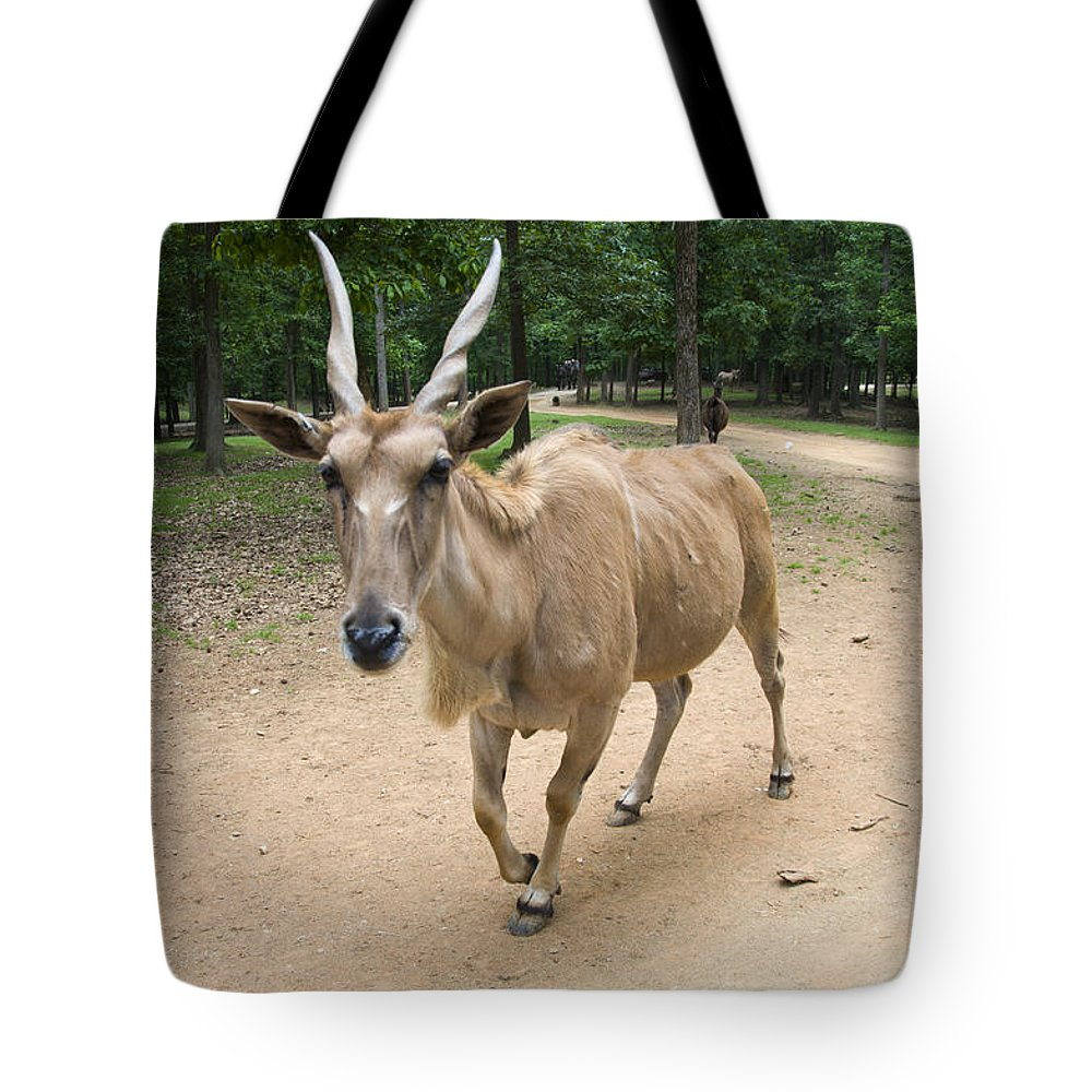 Antelope Tote Bag featuring the digital art Eland Antelope Out In The Open by Chris Flees