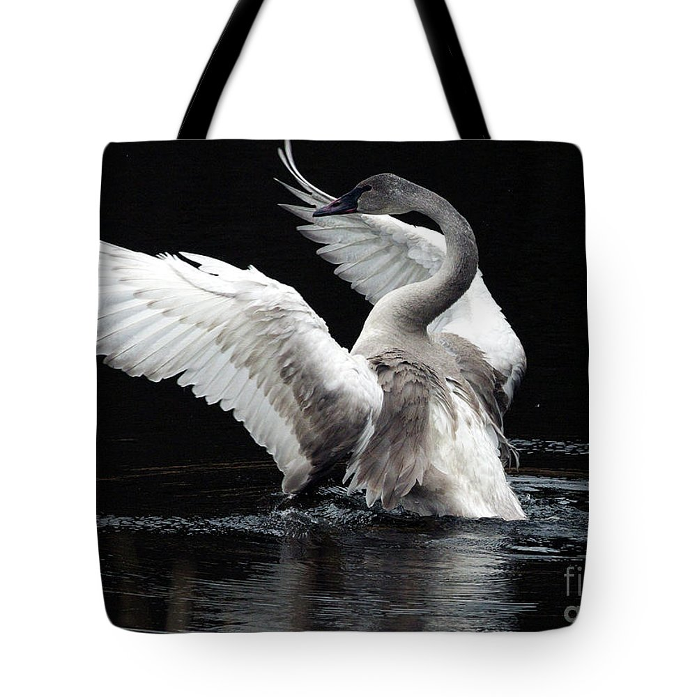 Trumpeter Swan Tote Bag featuring the photograph Elegance In Motion 2 by Sharon Talson