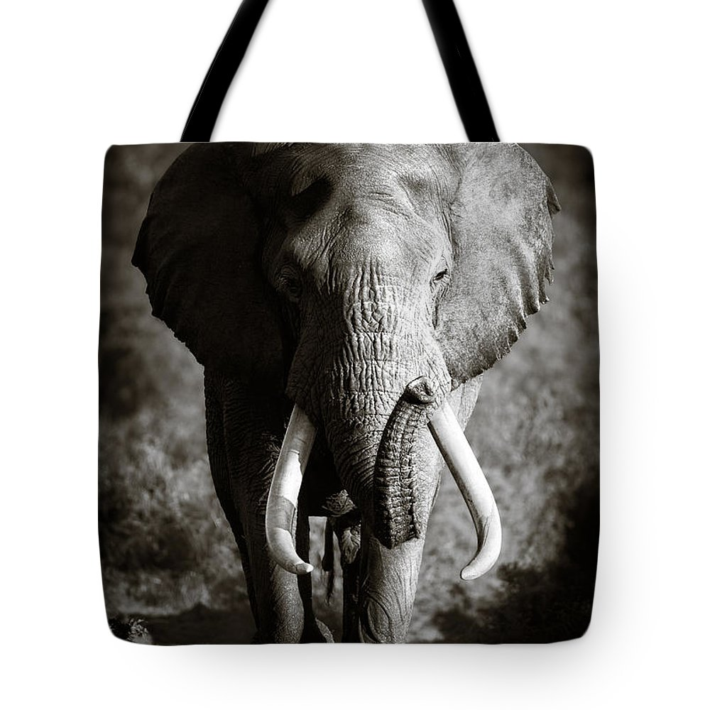 Elephant Tote Bag featuring the photograph Elephant Bull by Johan Swanepoel