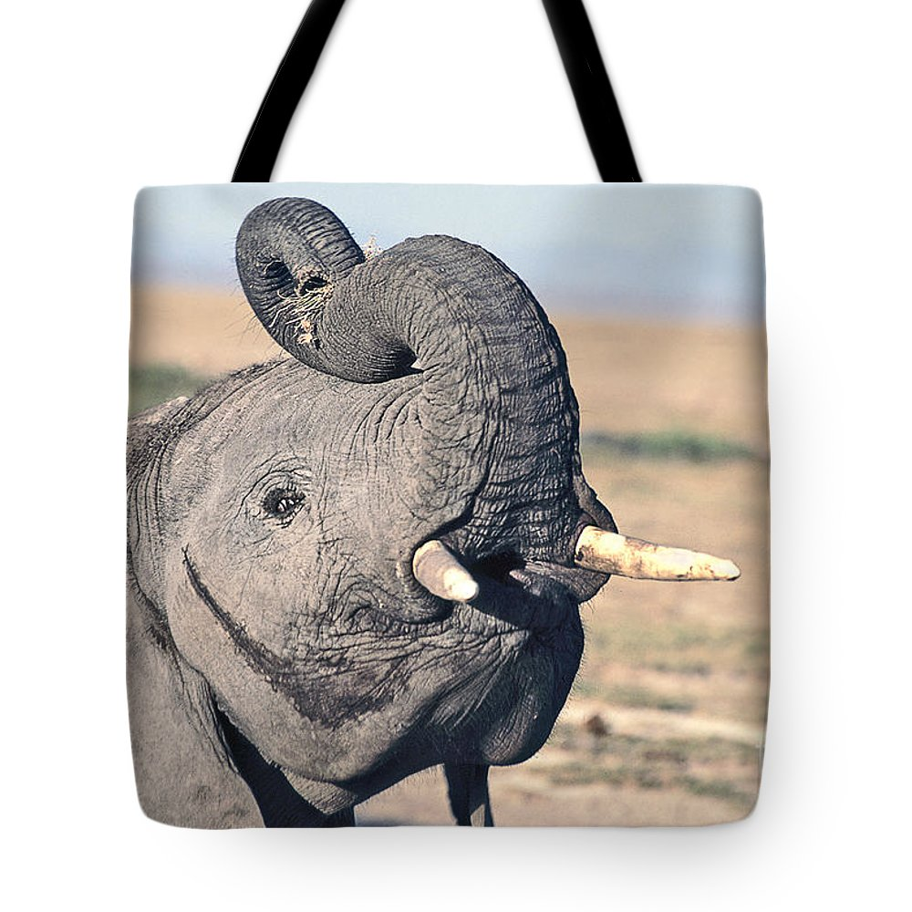 African Elephant Tote Bag featuring the photograph Elephant Curling Trunk by Liz Leyden