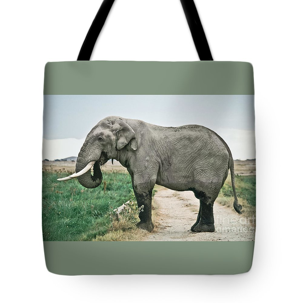 African Elephant Tote Bag featuring the photograph Elephant Roadblock by Liz Leyden
