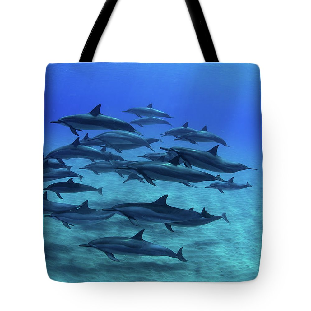Photography Tote Bag featuring the photograph Elevated View Of School Of Dolphins by Animal Images