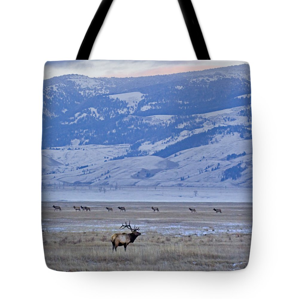 Cervus Canadensis Tote Bag featuring the photograph Elk At Dusk by J L Woody Wooden