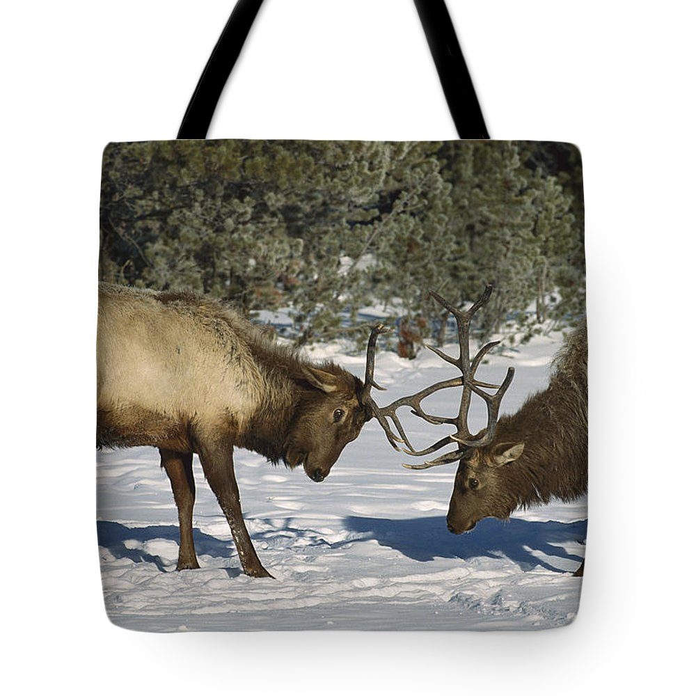 Antler Tote Bag featuring the photograph Elk Bulls Fighting In Yellowstone by Konrad Wothe