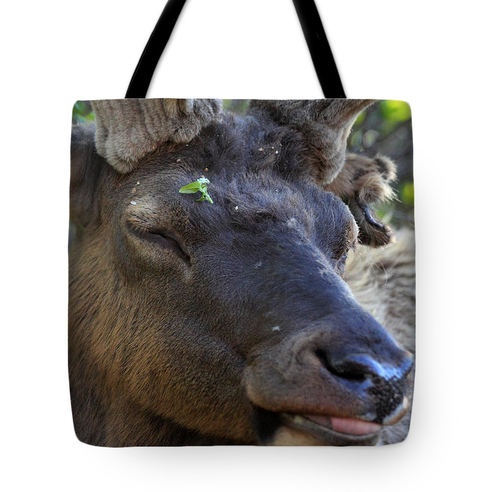 Elk Tote Bag featuring the photograph Elk Chuckle by Shane Bechler
