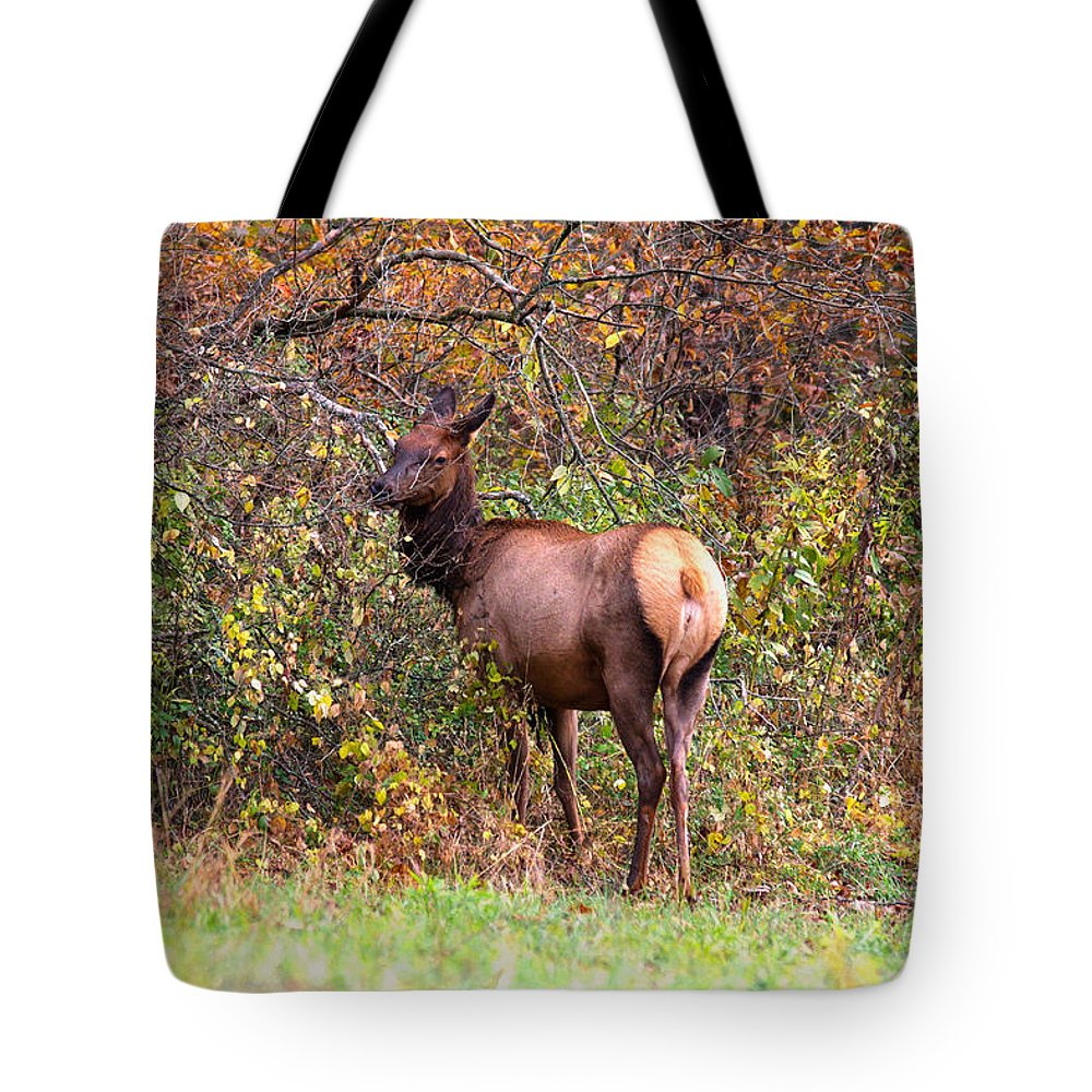 Lone Elk Tote Bag featuring the photograph Elk Cow by Mary Almond
