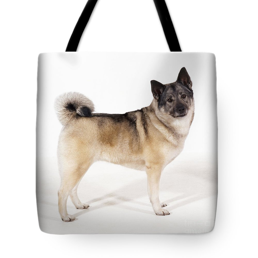 Elkhound Tote Bag featuring the photograph Elkhound Dog by John Daniels