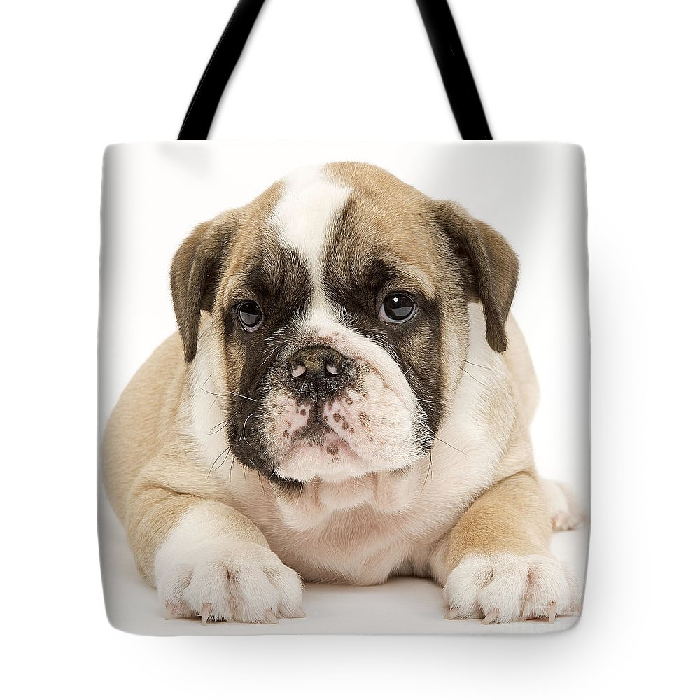 English Bulldog Tote Bag featuring the photograph English Bulldog Puppy by Jean-Michel Labat