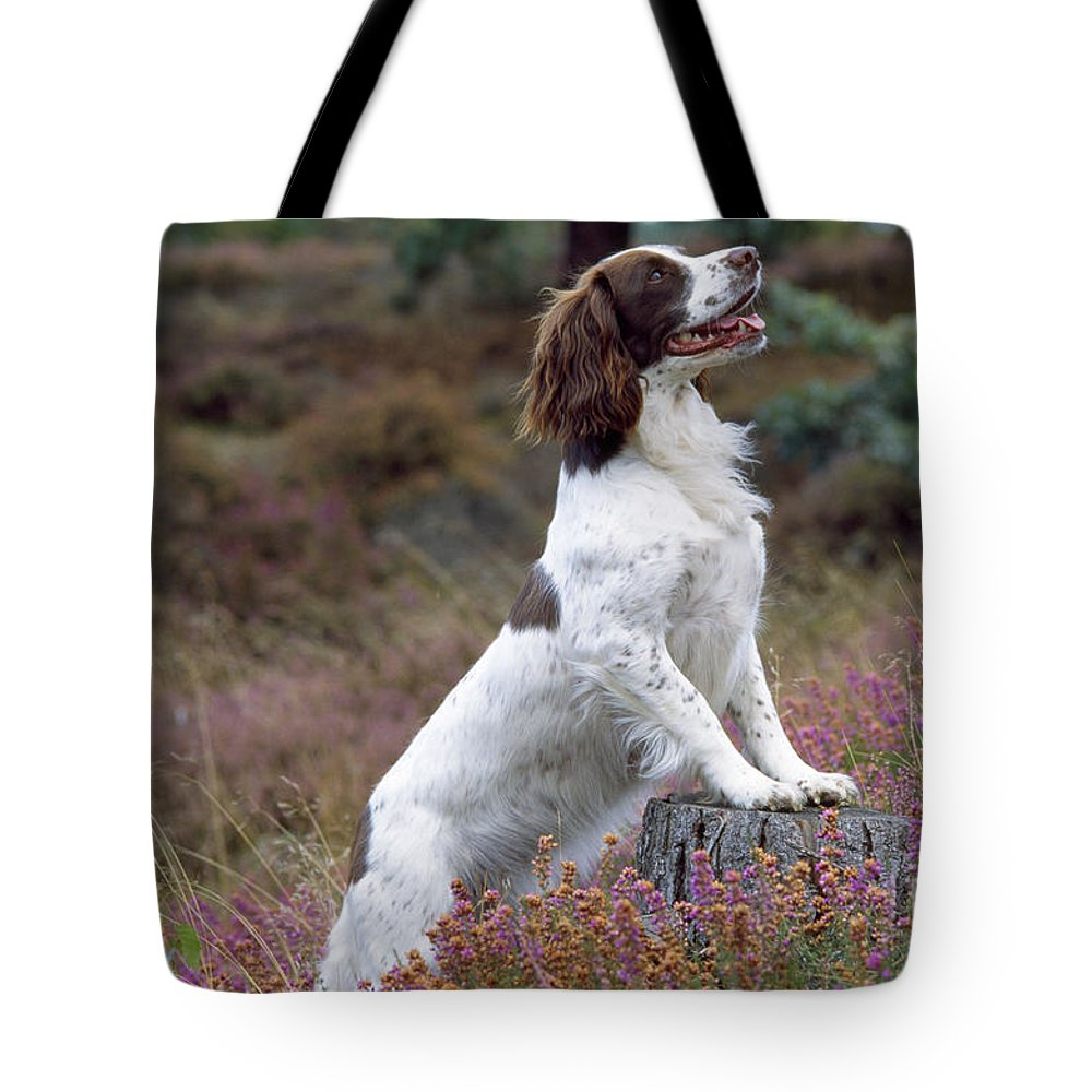 English Springer Spaniel Tote Bag featuring the photograph English Springer Spaniel Dog by John Daniels