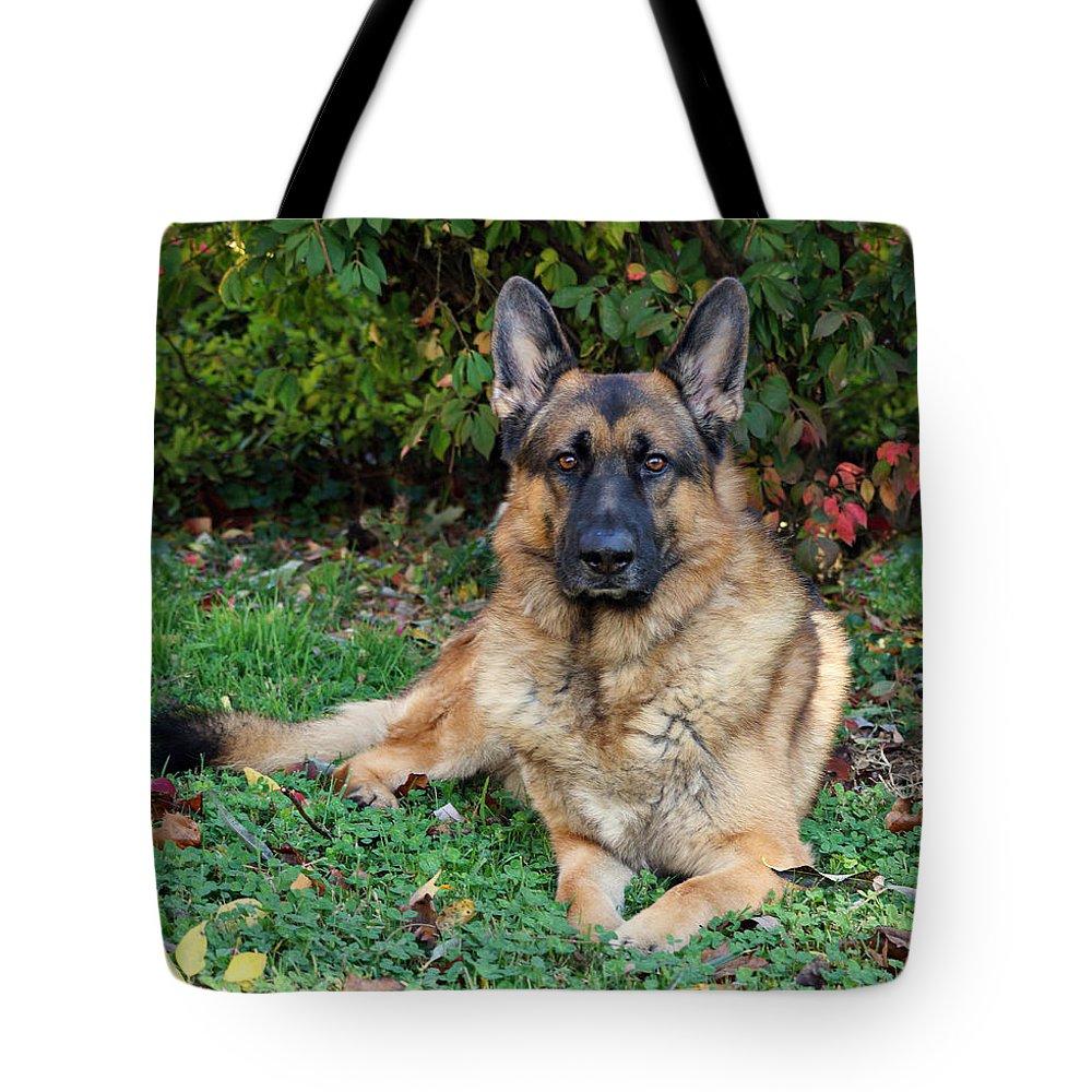 German Shepherd Tote Bag featuring the photograph Enjoying Autumn by Sandy Keeton