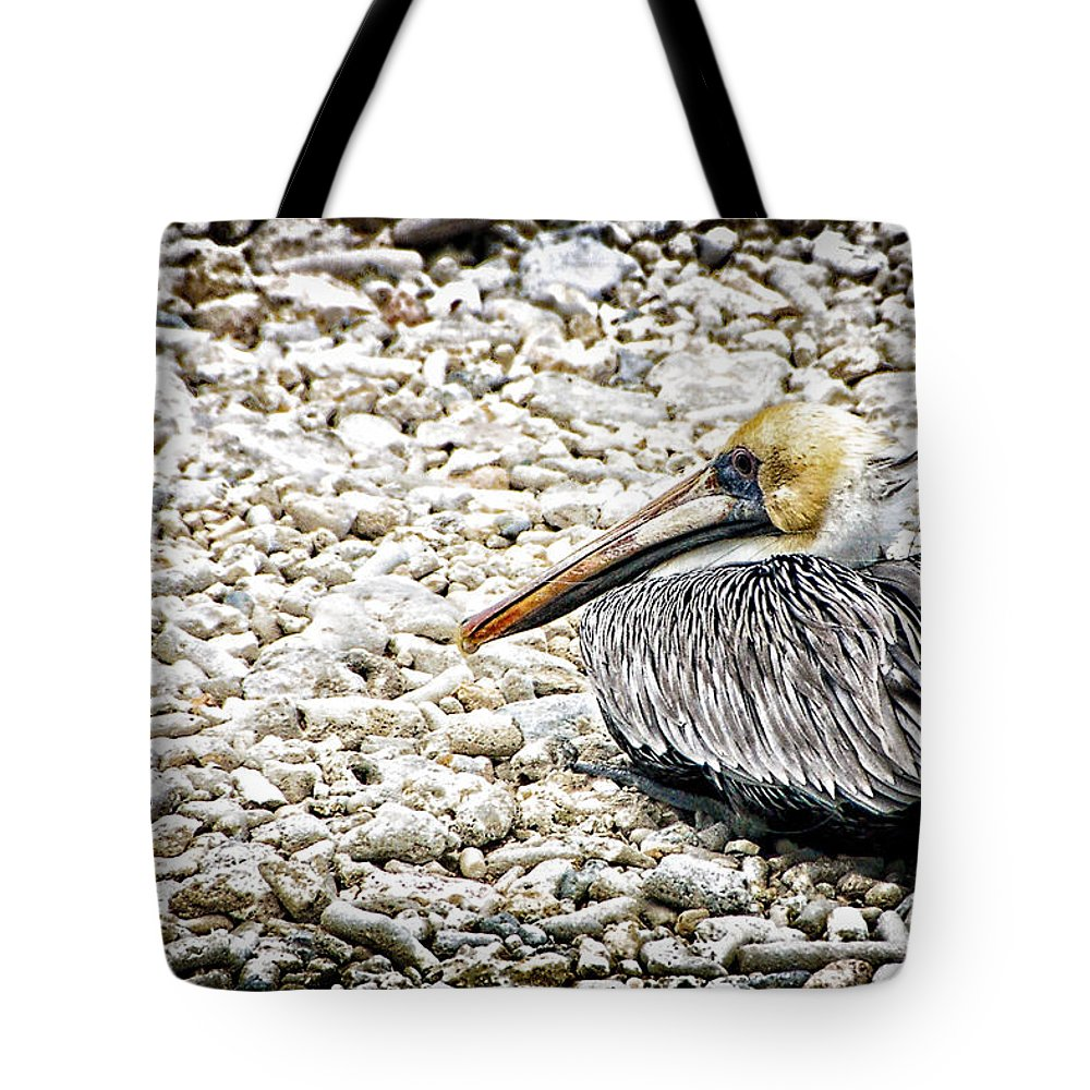 Curacao Tote Bag featuring the photograph Enjoying The View by Jon Berghoff
