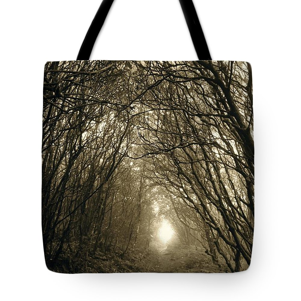 Forest Tote Bag featuring the photograph Enlightenment by AR Annahita