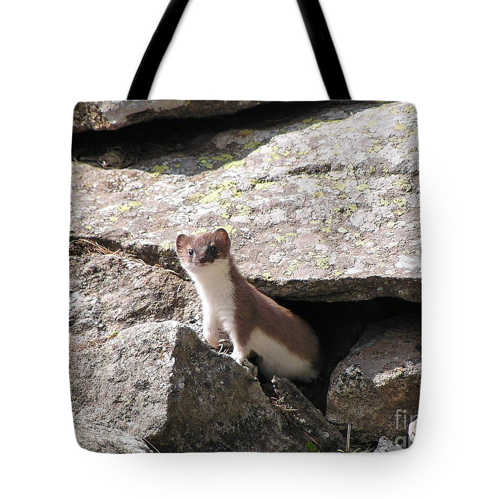 Alert Tote Bag featuring the photograph Ermine by Antonio Scarpi