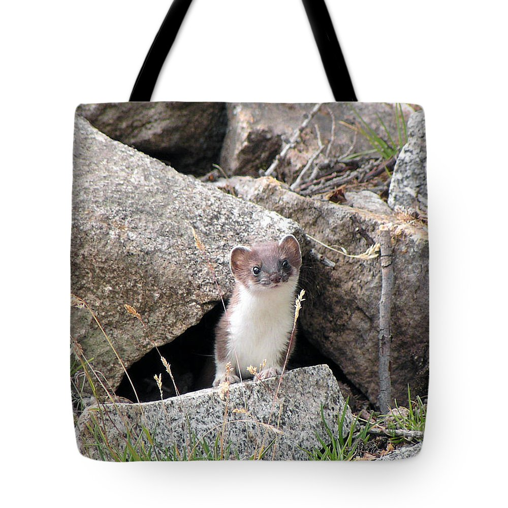 Alert Tote Bag featuring the photograph Ermine In Wildlife by Antonio Scarpi