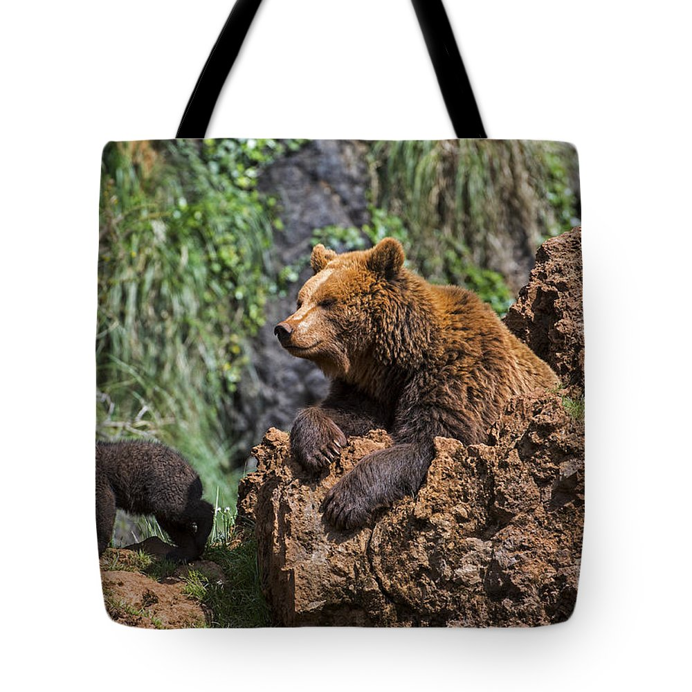 Mother Tote Bag featuring the photograph Eurasian Brown Bear 8 by Arterra Picture Library