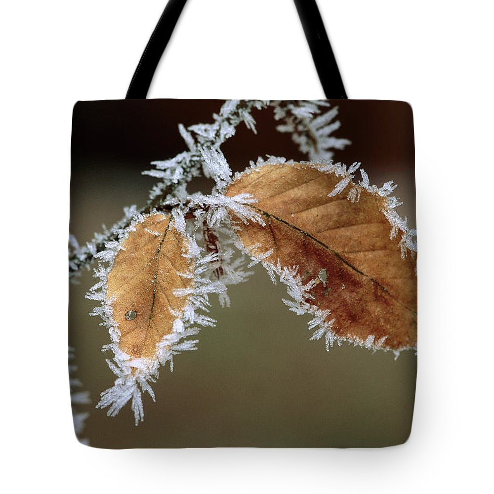 Color Image Tote Bag featuring the photograph European Beech Leaves With Frost by Thomas Marent
