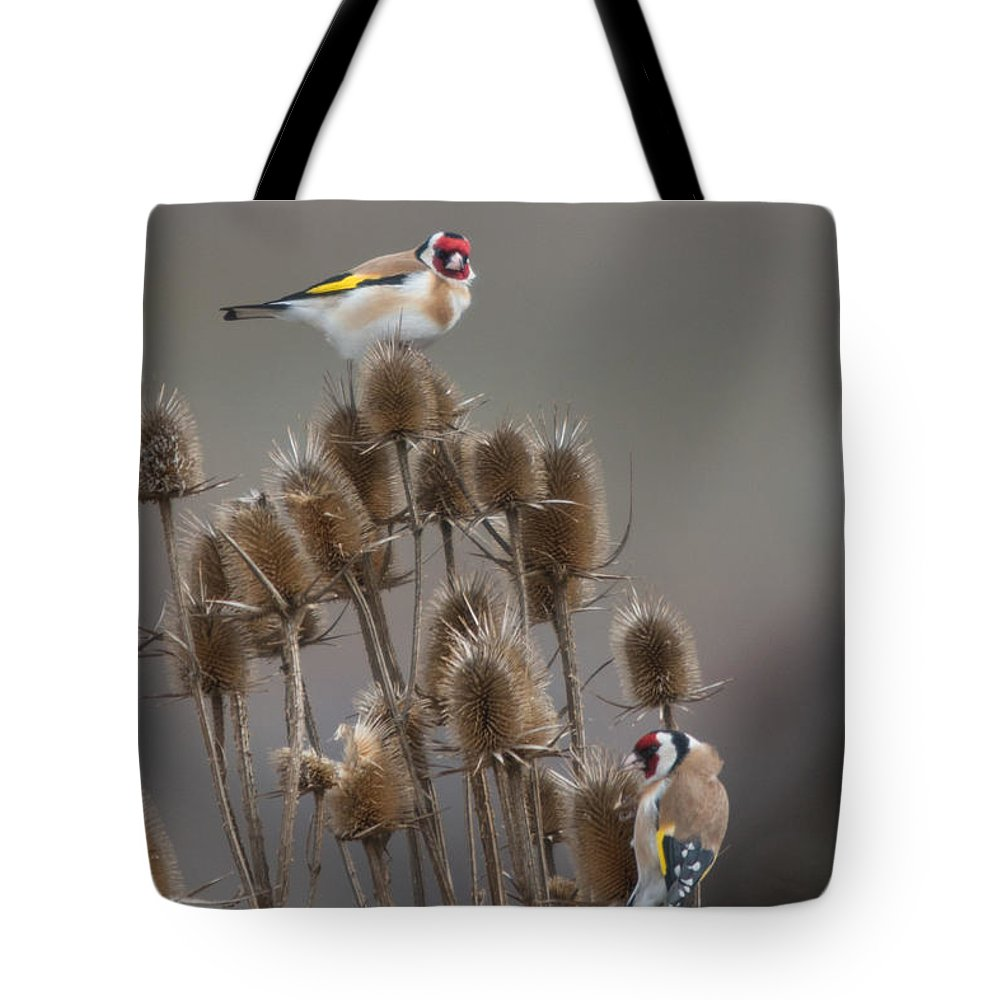 Aves Tote Bag featuring the photograph European Goldfinch by Jivko Nakev