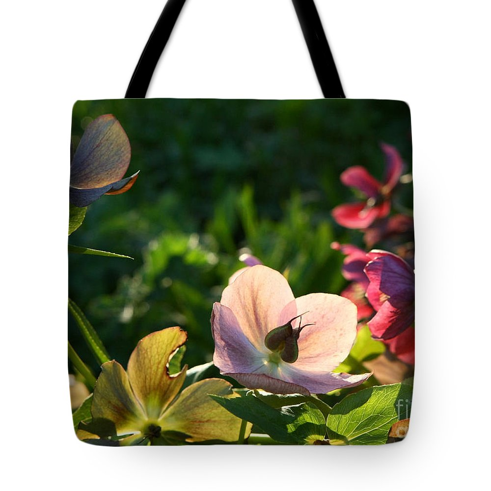 Flowers Tote Bag featuring the photograph Evening Light by Liz Alderdice