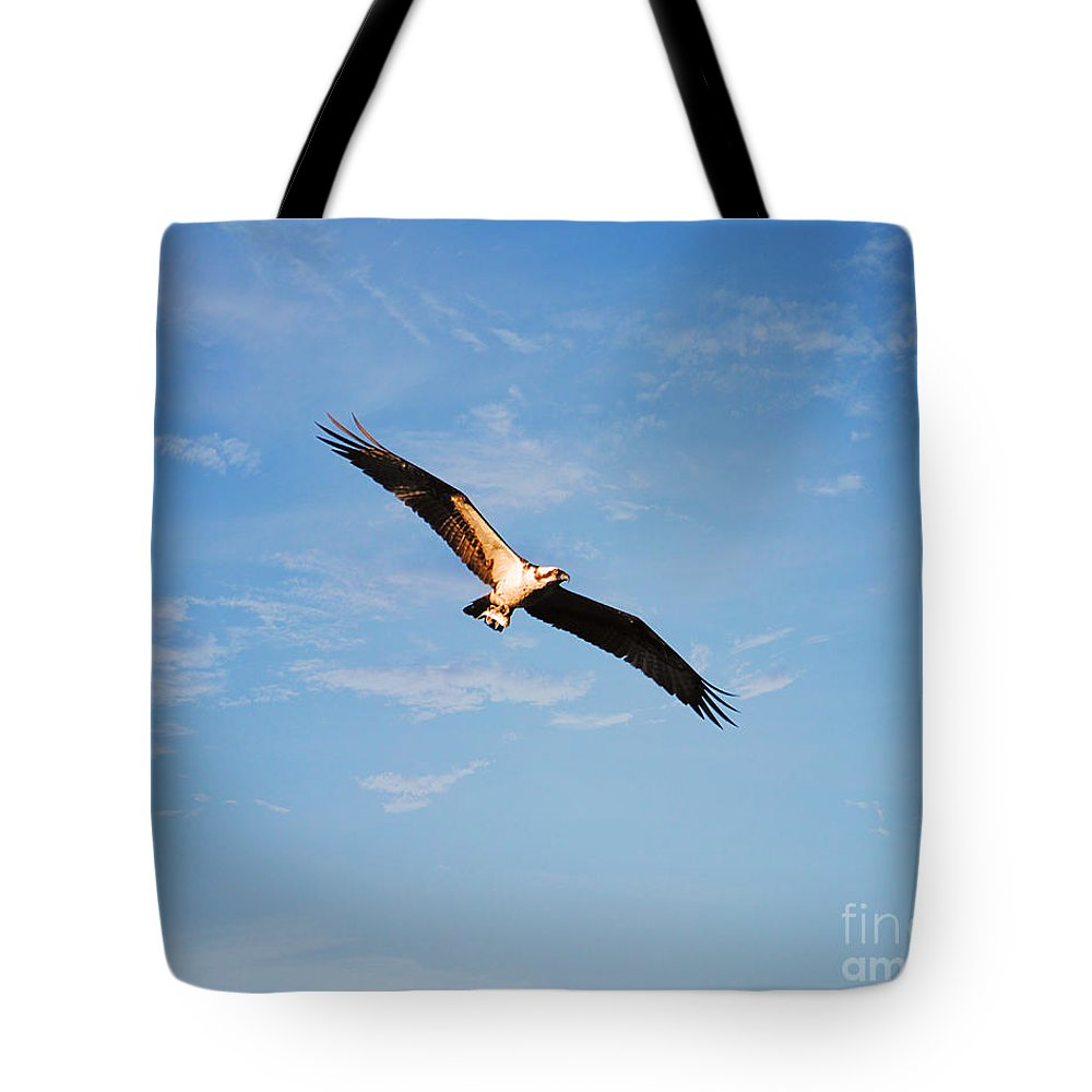 Bird Tote Bag featuring the photograph Evening Meal by Jai Johnson
