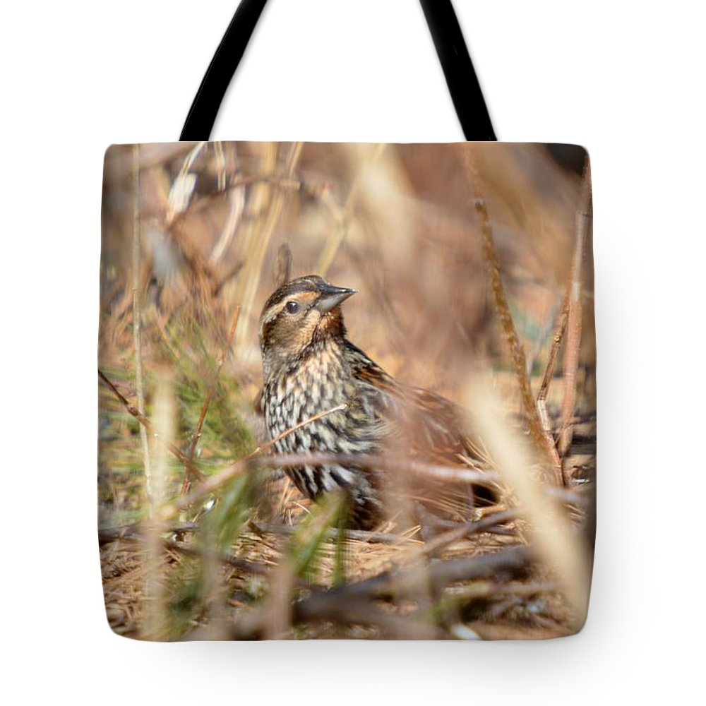 Red-winged Blackbird Tote Bag featuring the photograph Ever Attentive by Thomas Phillips
