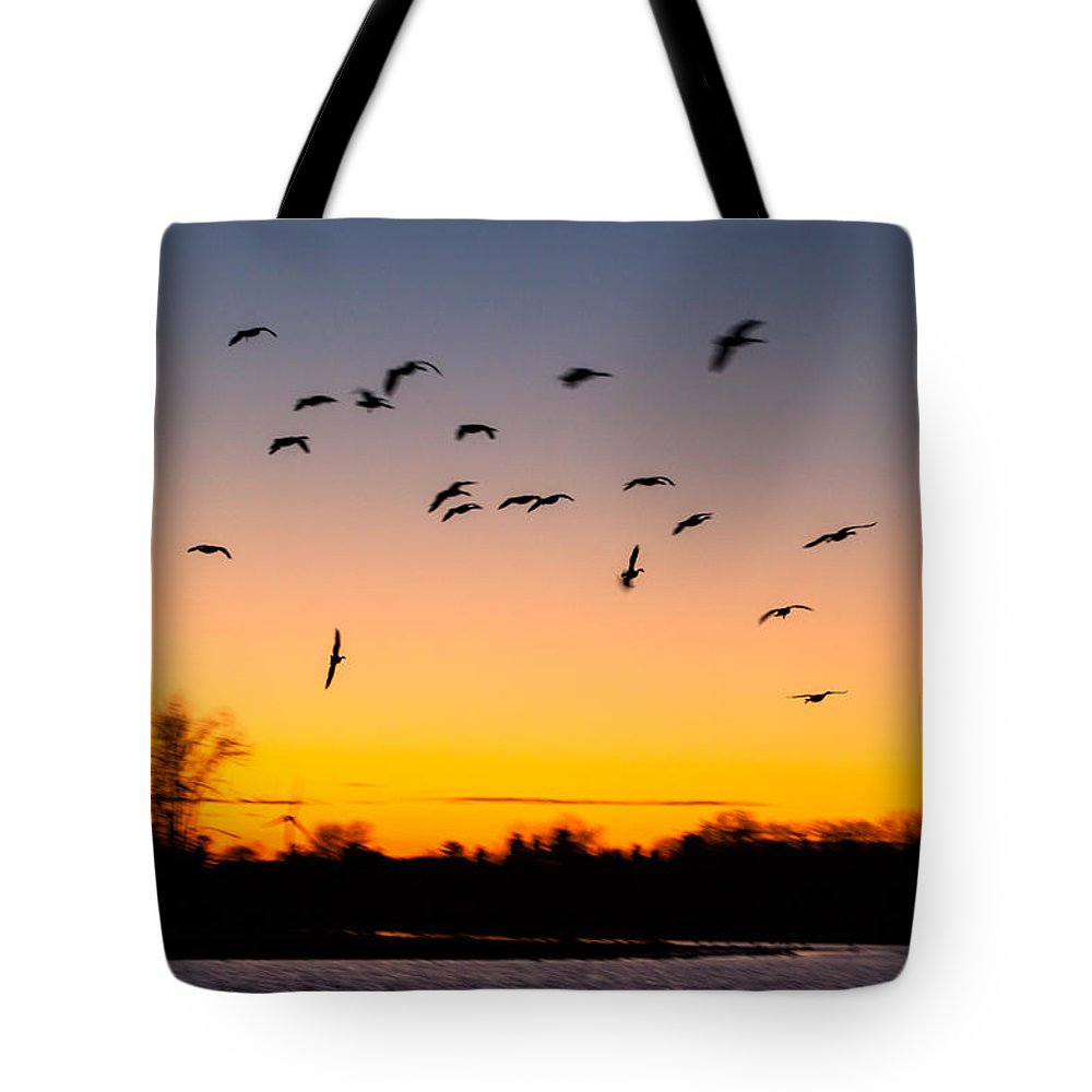 Goose Tote Bag featuring the photograph Every Which Way by Thomas Sellberg