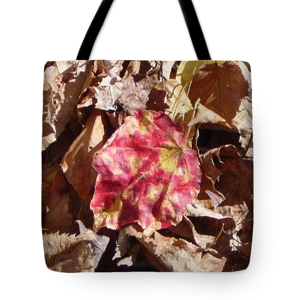 Tote Bag featuring the photograph Evolution Of Life With Color by Brian S Boucher