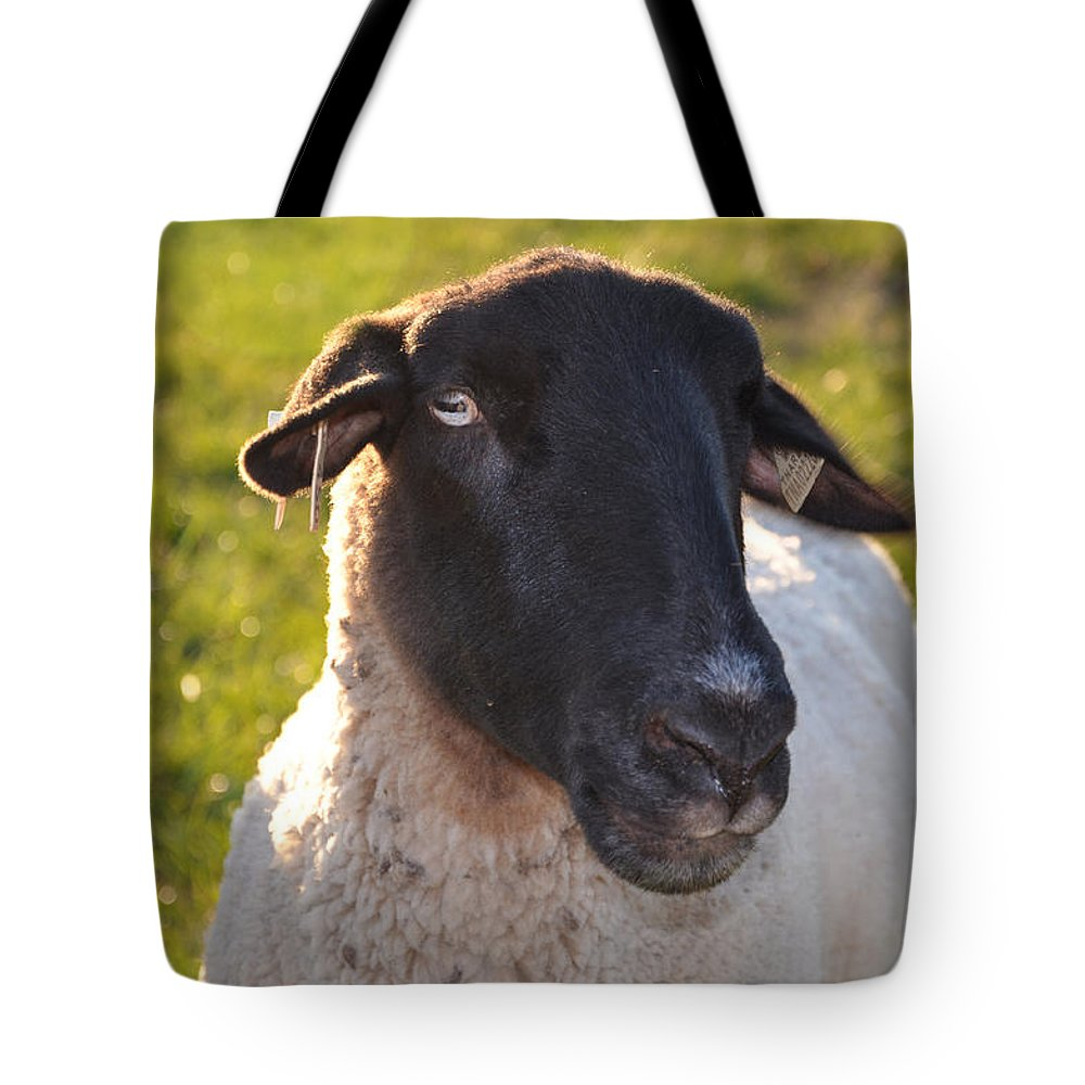 Animals Tote Bag featuring the photograph Ewe Bet I'm Cute by Jan Amiss Photography