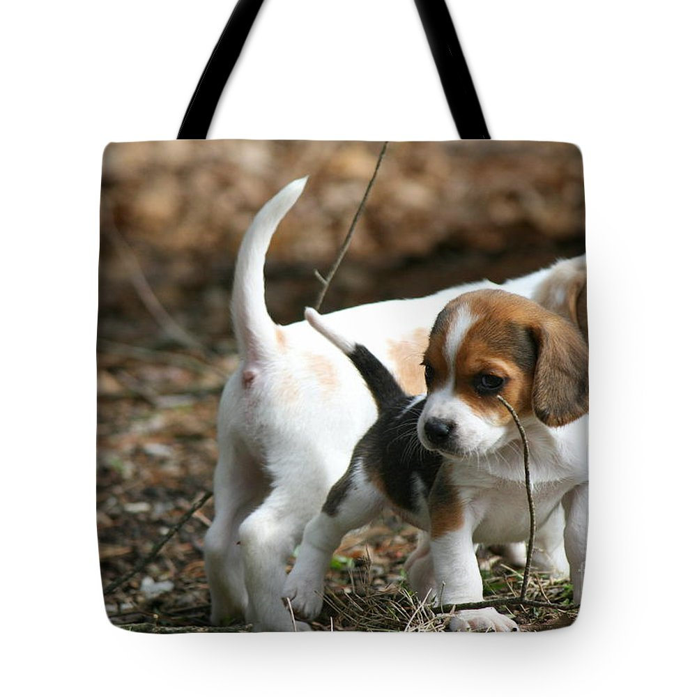 Beagle Puppy Tote Bag featuring the photograph Exploring Beagle Pups by Neal Eslinger