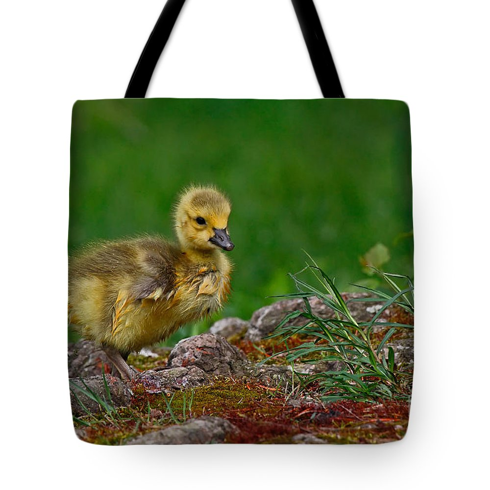 Bird Tote Bag featuring the photograph Exploring by Traci Law