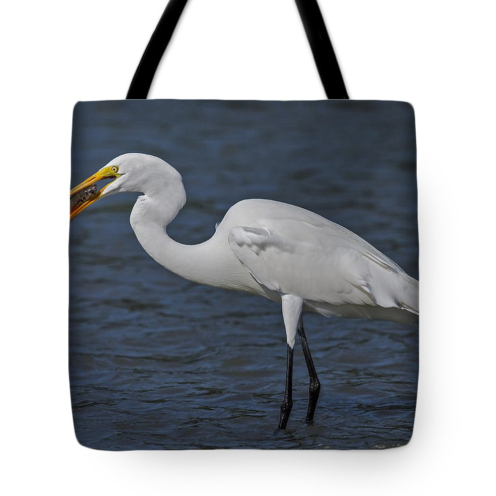 Animals Tote Bag featuring the photograph Eye To Eye by Susan Candelario