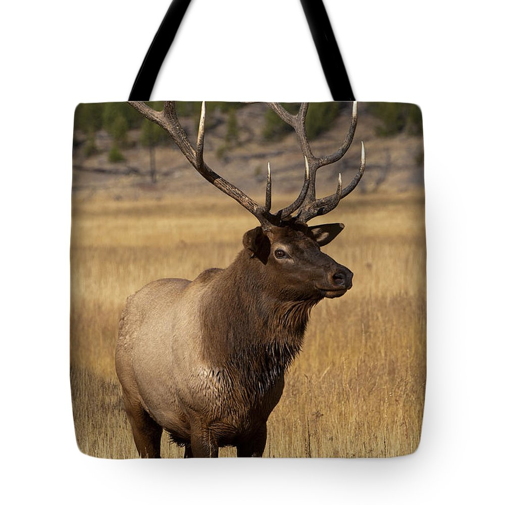 Yellowstone Tote Bag featuring the photograph Eyeing The Harem by Sandra Bronstein