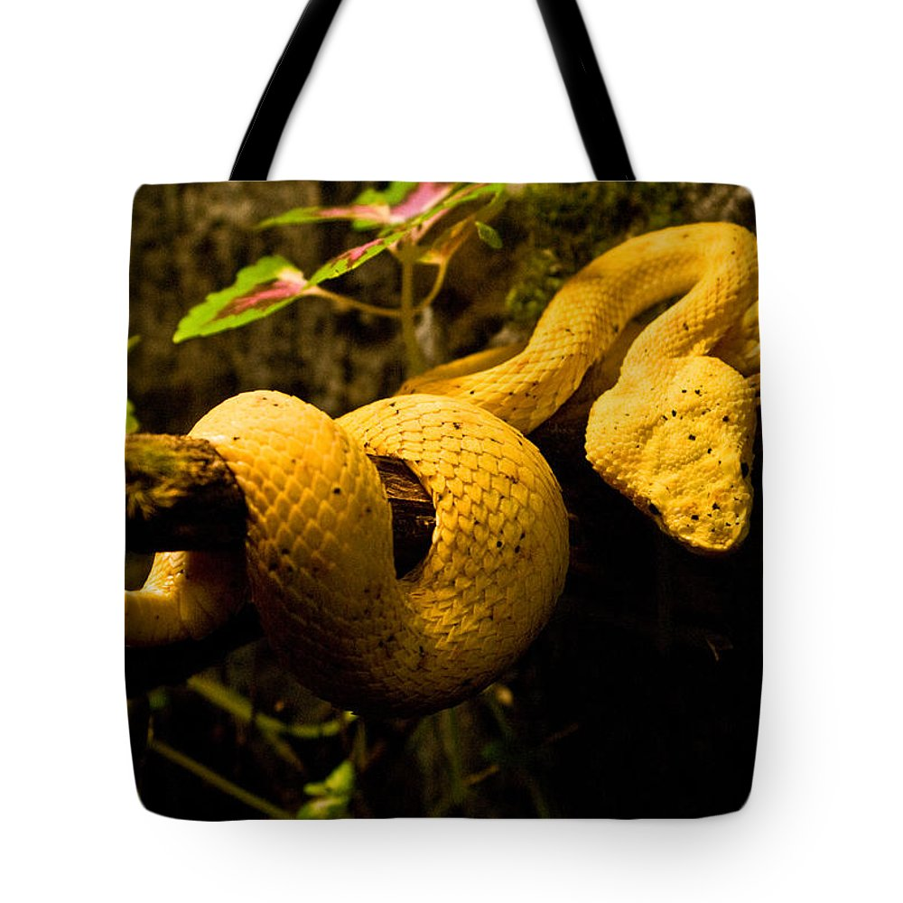 Yellow Tote Bag featuring the photograph Eyelash Viper by Douglas Barnett