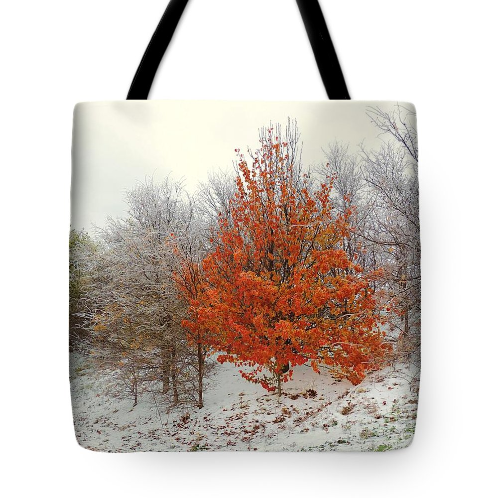 Fall Tote Bag featuring the photograph Fall And Winter by Robert ONeil