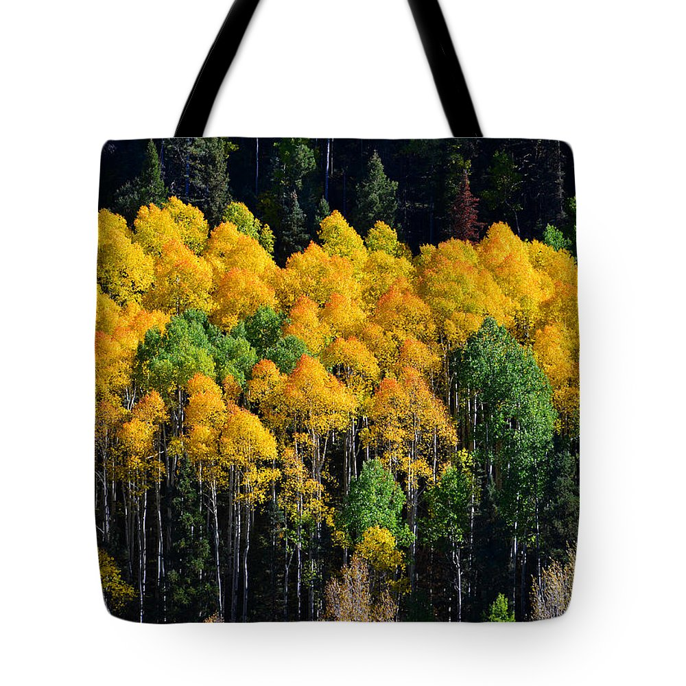 Aspaen Trees Tote Bag featuring the photograph Fall Aspens by David Lee Thompson