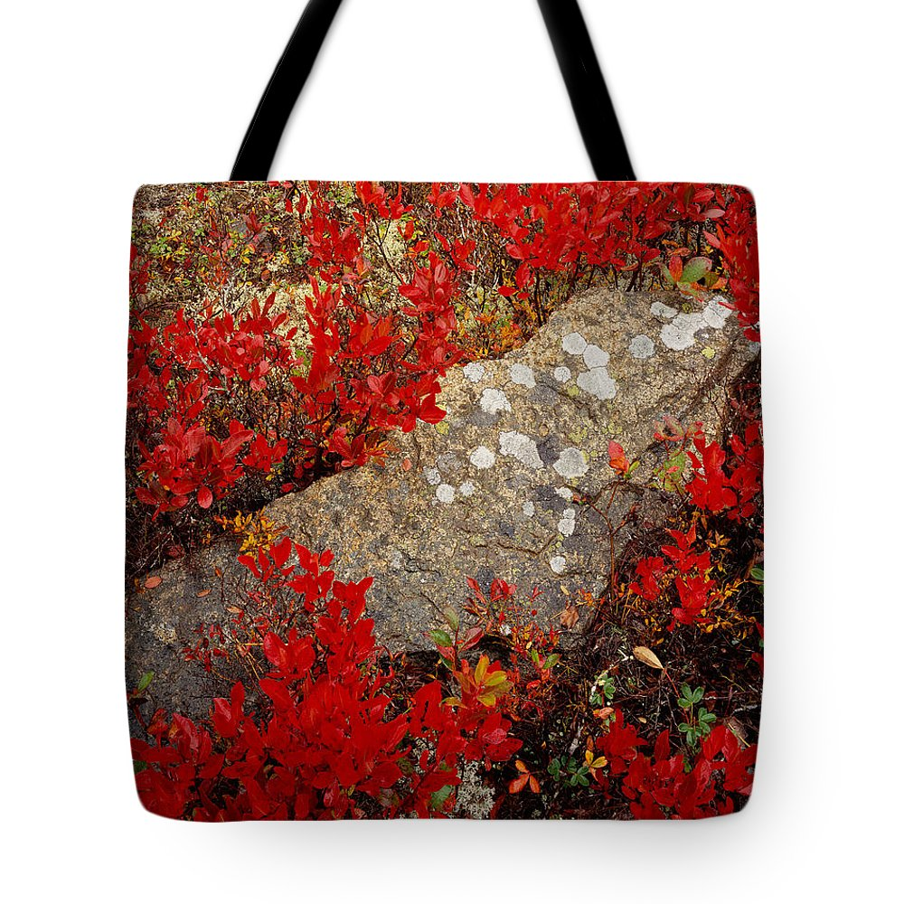 Maine Tote Bag featuring the photograph Fall Blueberries And Moss-h by Tom Daniel
